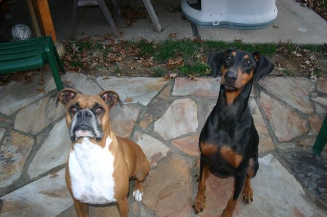 Beau & Zora