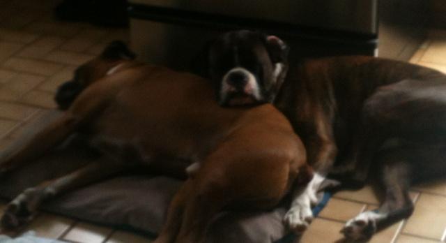 dogsleepcropped