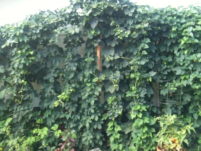 hop wall