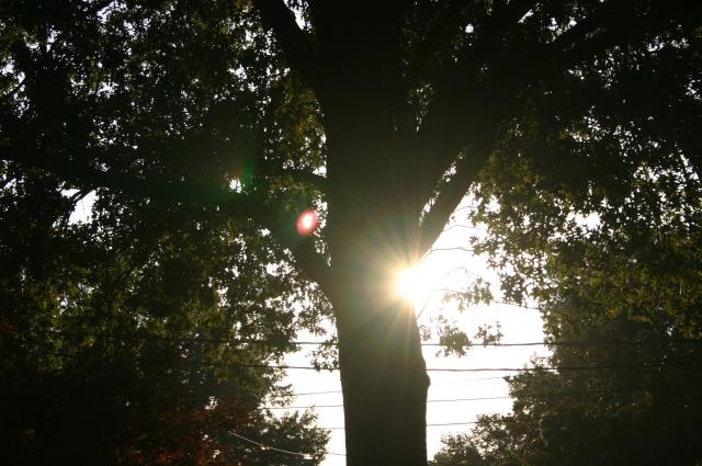 Sun n Tree